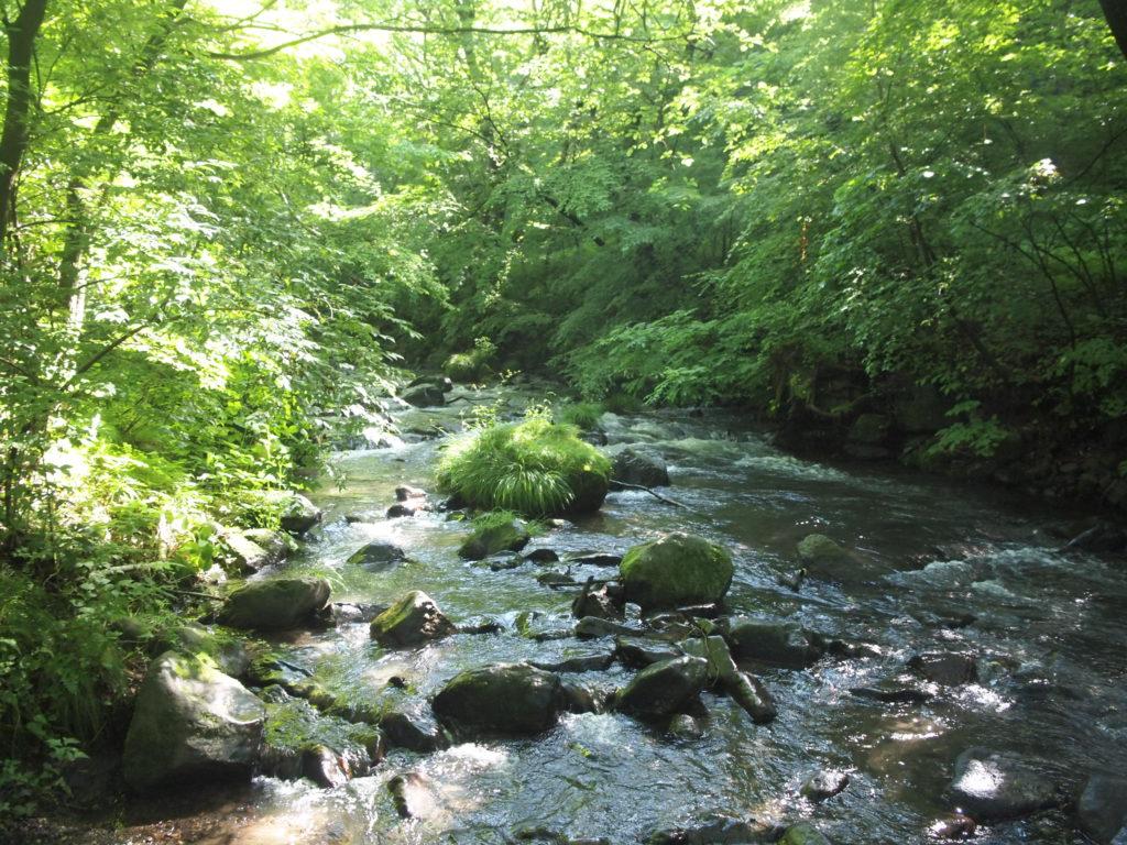 軽井沢の森林。